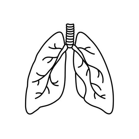 Human lungs flat style vector contour illustration. Internal organ icon. Anatomy, medicine concept. Healthcare. Isolated on white background. Vector Illustratie