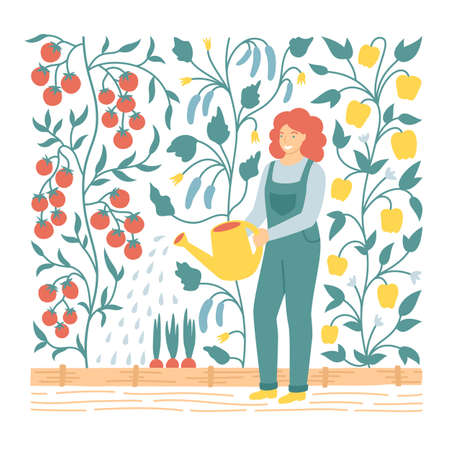 Vector flat illustration of woman watering vegetable garden beds for poster or postcard. Gardener planting tomatoes, cucumbers and paprica in greenhouse. Local food concept.