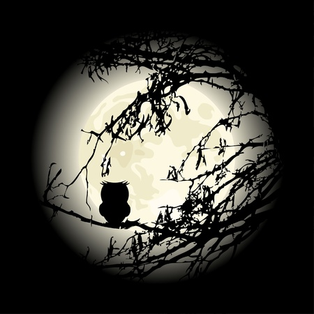 luna caricatura: B�ho solitario sentado en el �rbol en la noche, el vector