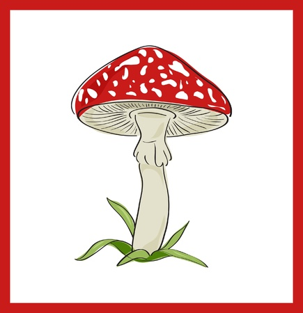 Fly agaric  death cup , vector illustration Vector