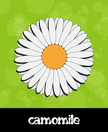 camomile flower: summer background with flower (camomile)