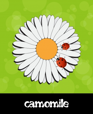 coccinellidae: Vector summer background with flower and ladybug Illustration