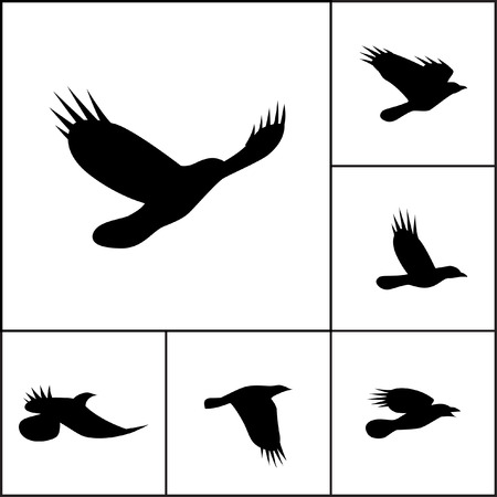 corvidae: Vector set of flying crows. Silhouettes of ravens, jays or rooks. Contours of pie, jackdaw, nutcrackers or other bird from family Corvidae Illustration
