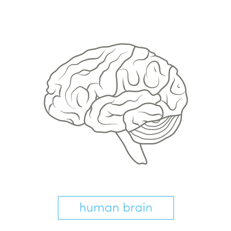 Profile view of a human brain. Outline vector illustration.