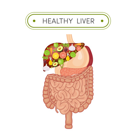 Cartoon illustration of digestive tract with healthy liver. Vegetables and fruits in shape of human liver symbolizing health 向量圖像