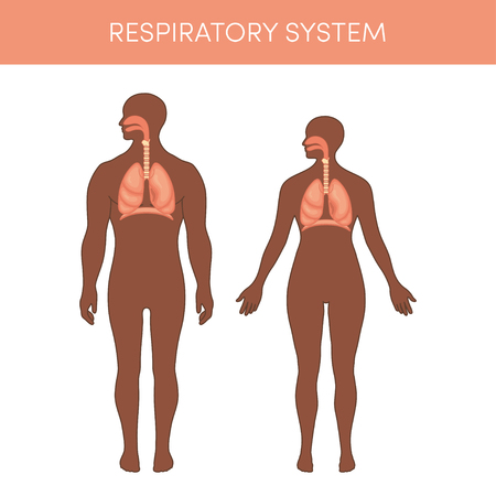 epiglottis: Respiratory system of a human. Cartoon vector illustration for medical atlas or educational textbook. Physiology of a black male and female. Illustration