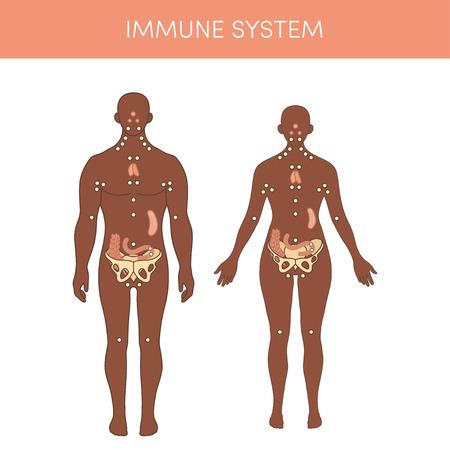 El sistema inmunológico de un humano. ilustración vectorial de dibujos animados para Atlas médicos o de libros de texto de educación. Fisiología de un macho negro y hembra.