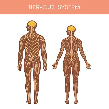 人間の神経システムです。アトラスの医療や教育の教科書の漫画ベクトル イラスト。黒の男性と女性の生理学。