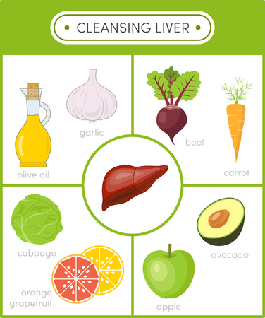 Concept of healthy liver.  Cleansing foods for liver. Set of cartoon icons for infographics 일러스트