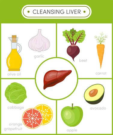 Concepto de hígado sano. La limpieza de los alimentos para el hígado. Conjunto de iconos de dibujos animados para la infografía Ilustración de vector