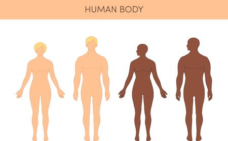 modelos desnudas: Conjunto de siluetas de humanos. cifras vector masculinos y femeninos, tanto caucásicos y africanos. Vectores