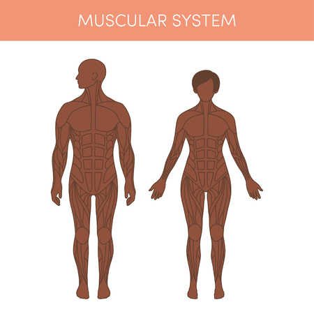 人間の筋肉のシステム。アトラスの医療や教育の教科書の漫画ベクトル イラスト。黒の男性と女性の生理学。