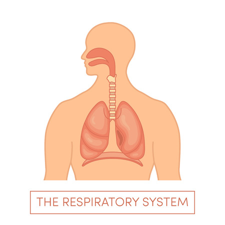 ENT: The respiratory system of a human. Cartoon vector illustration of a caucasian man