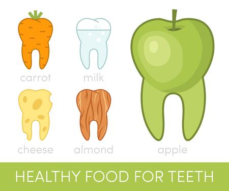 Healthy food for teeth in the shape of human molars, vector
