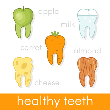 molares: Healthy food for teeth in the shape of human molars, vector
