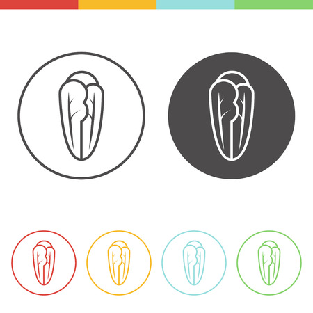 Vector set of romaine lettuce icons in thin line style Illustration