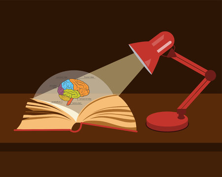Vector anatomy textbook. Human brain structure. Open book in the light of a desk lamp Stok Fotoğraf - 90906364