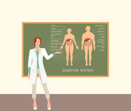 Female caucasian doctor teaching about digestive system, vector Illustration
