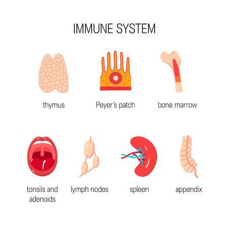 Immune system concept. Vector icons of human organs