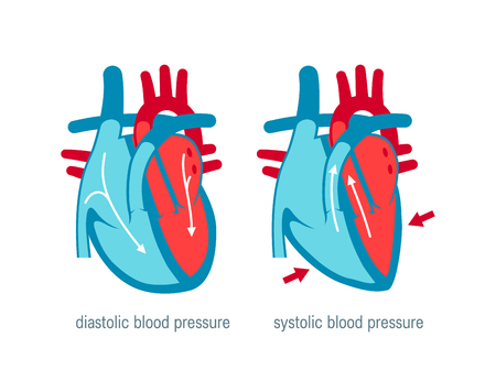 Diastolic and systolic blood pressure. Vector illustration in flat style for medical websites, infographics, books etc. Vector Illustratie