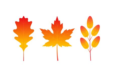 Set of colorful vector leaves in flat style. Simple icons isolated on white background