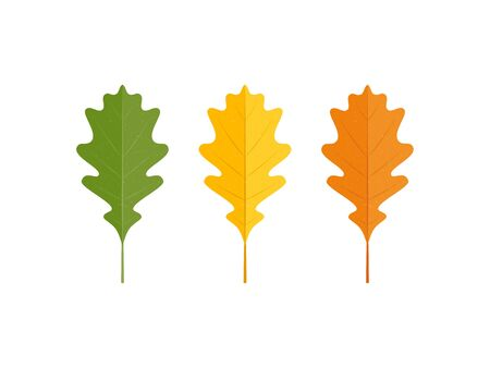Set of vector autumn oak leaves on white background in simple flat style 向量圖像