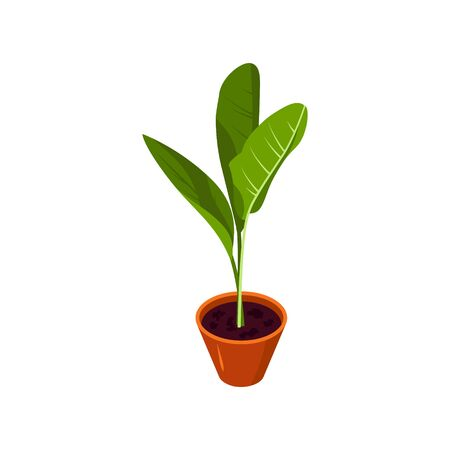 Isometric plant in scandinavian interior. Potted flower icon in flat style for hygge designs. Vector illustration isolated on a white background.