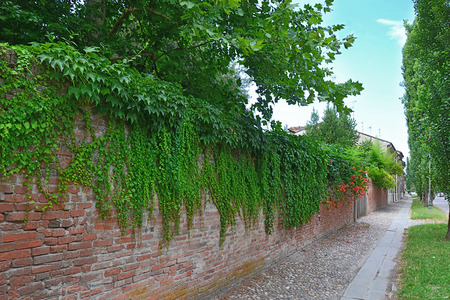 fence with brick pavement street green city photo