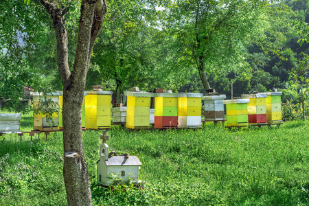 apiary: apiary hives in the trees pricked with green grass Stock Photo