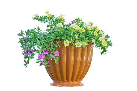 flowerpot isolated on white background beautiful flowers