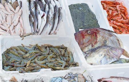 caballo bebe: pescado fresco, mercado de pescado, pesca, pescado de mar Foto de archivo