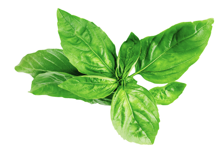basil spice kitchen seasoning savory herbs useful Imagens