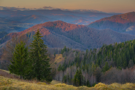 mountain forest slopes of the Carpathians green tree dry grass europe autumn in the mountains Stock Photo