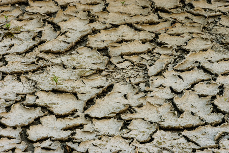 weary: weary land cracked desert drought