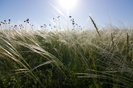 donbass: steppe of feather grass in  Donbass; Ukraine