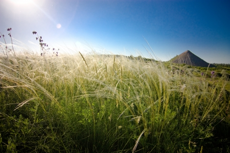 donbass: steppe of feather grass in Donbass, Ukraine