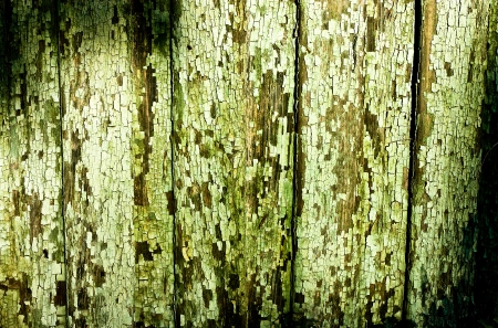 cracky: Green cracky grunge texture  Wood boards