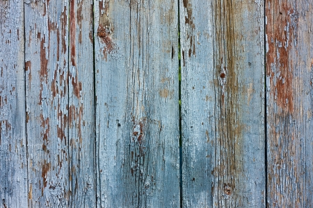 tacky: Wood tacky blue grunge texture of old boards