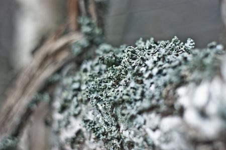 Moss on the tree. Shallow depth of field. Bokeh