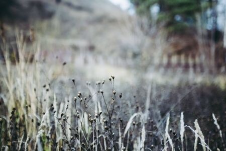 Dry flowers, stems of plants, leaves, herbs and grass in autumn season. Autumn sunset. 스톡 콘텐츠
