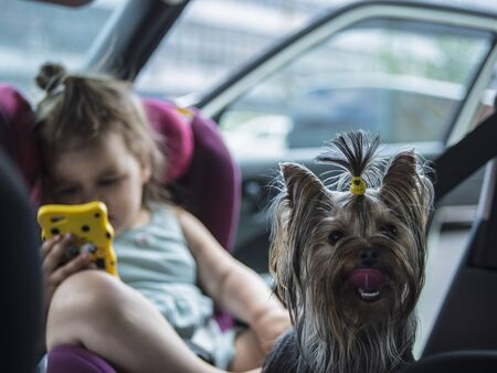 baby girl with a phone and small dog travels in a car seat in the front seat of a car on a hot summer day Foto de archivo - 133413736