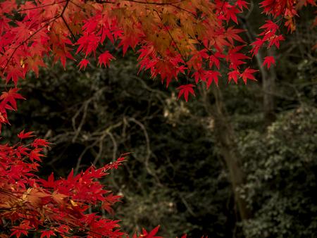 Autumn scenery in Hangzhou