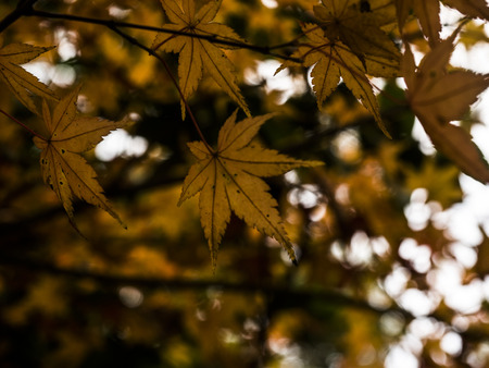 Paisaje de otoño en Hangzhou Foto de archivo