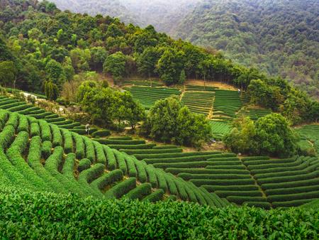 Longwu Tea Garden