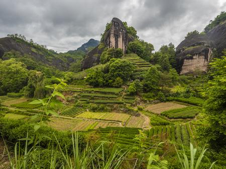 Wuyishan tea garden landscape scenery view Stock Photo