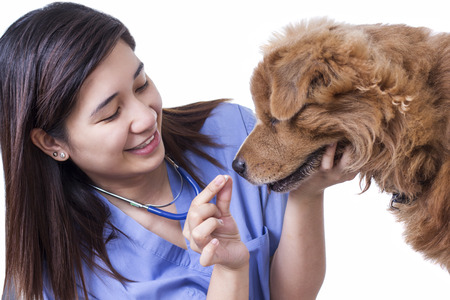 carreer: Young lady veterinary doctor giving tablet medicine to a sick dog. Isolated in white background. Stock Photo
