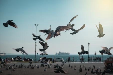 turd: Flock of pigeons coming down on seaside park