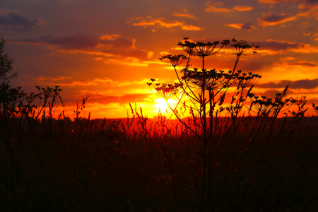 the silence of the world: Beautiful sunset with plants in foreground Stock Photo