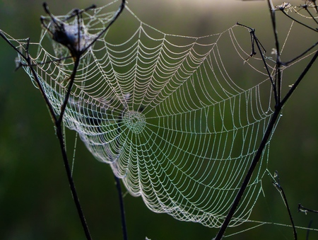 The spiders web in the early morning.