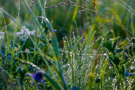 Morning dew on lush green grass, shrouded by strands of web. Stock Photo